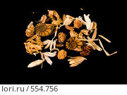 Купить «Натюрморт из цветов и ракушек на черном фоне», фото № 554756, снято 15 ноября 2018 г. (c) Дианова Елена / Фотобанк Лори