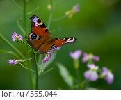 Бабочка Inachis io, фото № 555044, снято 17 августа 2008 г. (c) Ольга Киселева / Фотобанк Лори