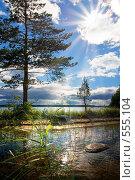 В солнечных лучах. Стоковое фото, фотограф Ольга Киселева / Фотобанк Лори