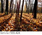 Осень в парке. Стоковое фото, фотограф Иван Маршинин / Фотобанк Лори