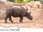 Купить «Носорог», фото № 556508, снято 21 августа 2008 г. (c) Виталий Романович / Фотобанк Лори