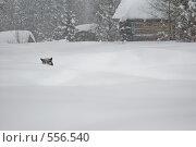 Зима. Стоковое фото, фотограф Иван Алферов / Фотобанк Лори
