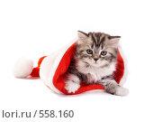 Купить «Котенок в новогоднем колпаке», фото № 558160, снято 9 ноября 2008 г. (c) Cветлана Гладкова / Фотобанк Лори