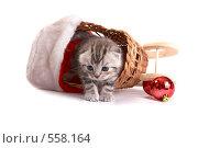 Купить «Серый котенок в корзинке», фото № 558164, снято 11 октября 2008 г. (c) Cветлана Гладкова / Фотобанк Лори