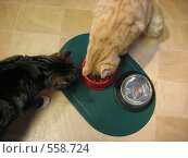 Два кота у кормушки. Стоковое фото, фотограф Anna Marklund / Фотобанк Лори