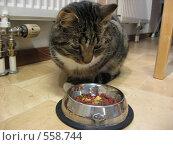 Кот ест из кормушки. Стоковое фото, фотограф Anna Marklund / Фотобанк Лори