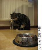 Кот умывается после еды. кормушка на переднем плане. Стоковое фото, фотограф Anna Marklund / Фотобанк Лори