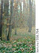 Купить «Осенний пейзаж», фото № 558764, снято 11 ноября 2008 г. (c) Сергей Литвиненко / Фотобанк Лори