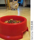 Рыжий кот, кормушка на переднем плане. Стоковое фото, фотограф Anna Marklund / Фотобанк Лори