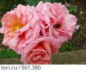 Купить «Цветы», фото № 561380, снято 12 июня 2008 г. (c) Виктор  Батавин / Фотобанк Лори
