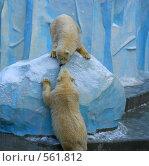Белые медведи. Стоковое фото, фотограф Марина Коваленко / Фотобанк Лори
