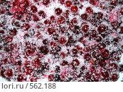 Клюква в сахаре. Стоковое фото, фотограф Марина Кириленко / Фотобанк Лори