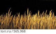 Купить «Осенние травы», фото № 565968, снято 3 ноября 2008 г. (c) Анатолий Теребенин / Фотобанк Лори