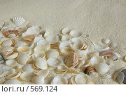 Песок и раковины. Стоковое фото, фотограф Елена Элевтерова / Фотобанк Лори