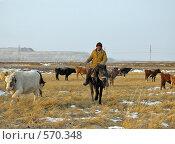 Купить «Выпас зимой в Забайкалье», фото № 570348, снято 19 ноября 2008 г. (c) Геннадий Соловьев / Фотобанк Лори