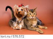 Купить «Йоркширский терьер с кошкой», фото № 570572, снято 2 ноября 2008 г. (c) Vladimir Suponev / Фотобанк Лори