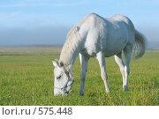Белоснежная лошадь в поле, фото № 575448, снято 10 августа 2008 г. (c) Абрамова Ксения / Фотобанк Лори