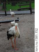 Птица. Стоковое фото, фотограф Terentiev Maxim / Фотобанк Лори