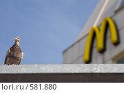 Голубь на фоне Макдоналдса (2008 год). Редакционное фото, фотограф Кирилл Чернов / Фотобанк Лори