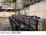 Голуби на скамейках (2007 год). Стоковое фото, фотограф Артем Абрамян / Фотобанк Лори