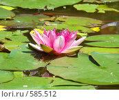 Кувшинка на болоте. Стоковое фото, фотограф Виктор Бондарь / Фотобанк Лори