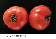 Купить «Два красных свежих помидора», фото № 590820, снято 29 ноября 2008 г. (c) Vadim Tatarnitsev / Фотобанк Лори