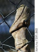 Купить «Застарелая боль», фото № 591860, снято 9 декабря 2006 г. (c) Игорь Киселёв / Фотобанк Лори