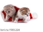 Купить «Котята в шапке Санта-Клауса на белом фоне», фото № 593224, снято 11 октября 2008 г. (c) Cветлана Гладкова / Фотобанк Лори