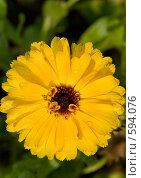 Купить «Цветок желтый», фото № 594076, снято 16 августа 2008 г. (c) Абрамов Антон / Фотобанк Лори
