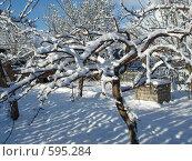 Фруктовые деревья в зимнем саду. Стоковое фото, фотограф Александр Новиков / Фотобанк Лори