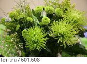 Купить «Букет из зеленых хризантем», фото № 601608, снято 5 декабря 2008 г. (c) Наталья Волкова / Фотобанк Лори