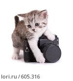 Купить «Котенок и камера», фото № 605316, снято 20 сентября 2008 г. (c) Cветлана Гладкова / Фотобанк Лори