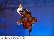 Орхидея. Стоковое фото, фотограф Ермаков Андрей / Фотобанк Лори