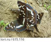 Купить «Скопление бабочек», фото № 615116, снято 2 июля 2008 г. (c) Иванова Наталья / Фотобанк Лори