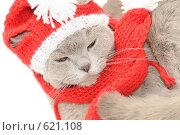 Купить «Кошка в вязаной шапке и шарфе», фото № 621108, снято 14 декабря 2008 г. (c) Ксения Крылова / Фотобанк Лори