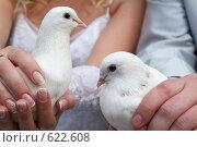 Купить «Белые голуби в руках молодоженов», фото № 622608, снято 16 августа 2008 г. (c) Алексей Лобанов / Фотобанк Лори