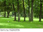 Солнечный парк. Стоковое фото, фотограф Наталья Груздева / Фотобанк Лори