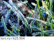 Купить «Зелёная трава, покрытая инеем», фото № 625904, снято 8 ноября 2008 г. (c) Сергей Пестерев / Фотобанк Лори