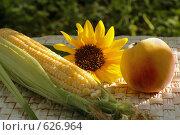 Купить «Натюрморт с кукурузой, подсолнухом, персиком», фото № 626964, снято 26 июля 2007 г. (c) Татьяна Белова / Фотобанк Лори