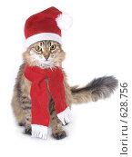 Купить «Кот в красном колпаке Санты Клауса», фото № 628756, снято 22 декабря 2008 г. (c) Вячеслав Жуковский / Фотобанк Лори