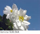 Купить «Пчёлка с радужными крыльями на белом цветке», фото № 630564, снято 21 сентября 2008 г. (c) Светлана Кудрина / Фотобанк Лори