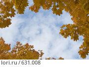 Купить «Голубое небо, обрамленное желтыми кленовыми листьями», фото № 631008, снято 5 октября 2008 г. (c) Юрий Егоров / Фотобанк Лори