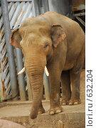 Купить «Слон», фото № 632204, снято 6 июня 2008 г. (c) Алексей Семьёшкин / Фотобанк Лори
