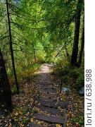 Ступени в лесу. Стоковое фото, фотограф Юрий Бульший / Фотобанк Лори