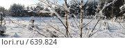 Купить «Зимний лес», фото № 639824, снято 24 апреля 2019 г. (c) Вячеслав Борисевич / Фотобанк Лори