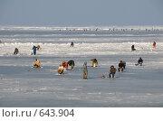Купить «Владивосток. Амурский залив.», фото № 643904, снято 6 января 2009 г. (c) Сергеев Игорь / Фотобанк Лори
