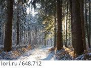 Купить «Зимний лес», фото № 648712, снято 6 января 2009 г. (c) Михаил Лавренов / Фотобанк Лори