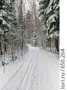 Купить «Лыжня в лесу», фото № 650264, снято 28 декабря 2008 г. (c) Елена Галачьянц / Фотобанк Лори