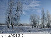 Купить «Зимний полдень в берёзовой роще», фото № 651540, снято 10 января 2008 г. (c) Александр Шилин / Фотобанк Лори