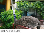 Страус. Стоковое фото, фотограф tyuru / Фотобанк Лори